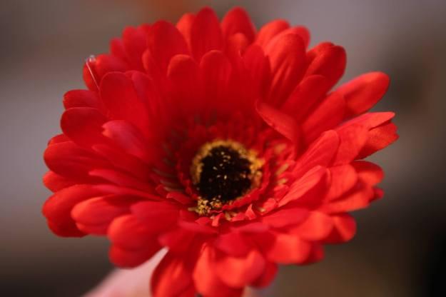 Blomma röd