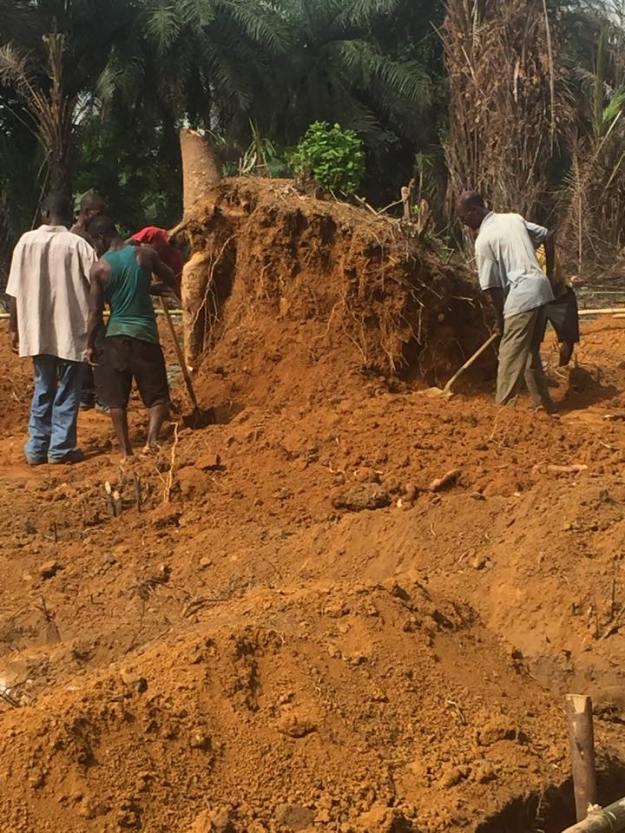Hard work digging